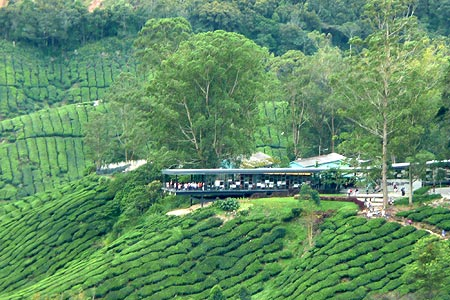 Sungei Palas Tea Centre, The tea center by BOH Plantations at the Sungei Palas tea garden is located just above Brinchang. Located on a hilltop, amidst rows of tea bushes and close to Gunung Brinchang, it offers spectacular views from a 20 foot overhanging platform and tours through the tea factory