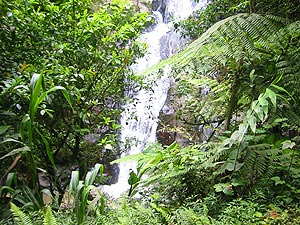 Jungle Walks - Trail 9A, There are 13 Trails in and around Tanah Rata and Brinchang, varying from a few hours to full-day, to explore the Cameron Highlands rainforest yourself. Track 9A starts out at the western end of Tanah Rata und passes the Robinson Falls.