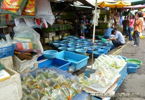 goldfishes, aquariums, jalan pasar, pudu market