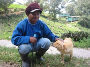 Cameron Highlands,  plantation worker with a dog