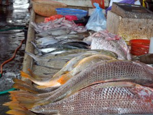 Wet Markets,  fishes