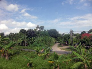 Jungle Train,  banana trees
