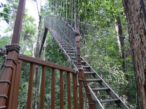 Taman Negara,  stairs to canopy walk