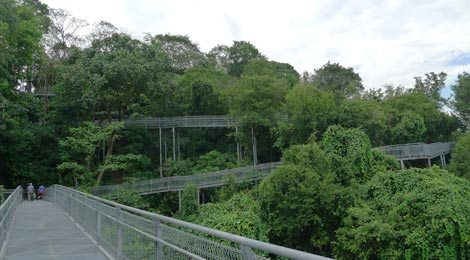 elevated walkway, Forest Walk, Telok Blangah Hill Park