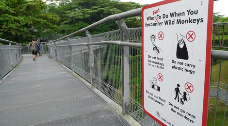 information board about monkeys, elevated walkway, Forest Walk, Telok Blangah Hill Park