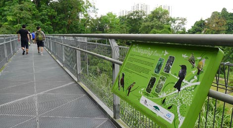 bird information board, elevated walkway, Forest Walk, Telok Blangah Hill Park