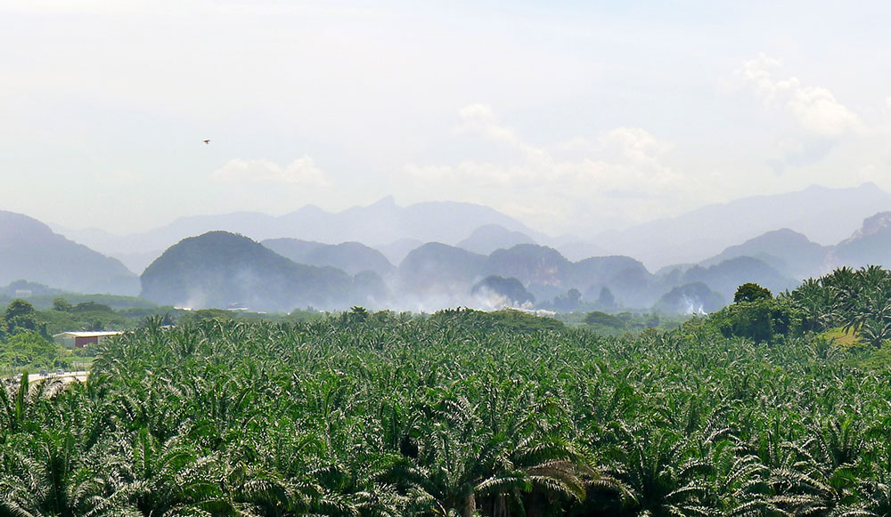oilpalm fields, carst mountains