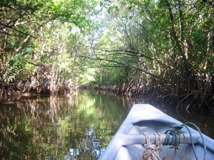 Mangrove River Tour, A must-do in Cherating is a boat tour into the mangrove forest. The guides are good in spotting various animals, includings snakes.