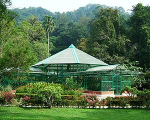 Botanical Gardens, Park created in 1884, the gardens is spread over 30ha of forested hills and lush green tropical trees and plants.