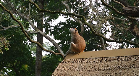 monkey in Singapore Zoo