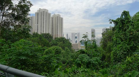 view, elevated walkway, Forest Walk, Telok Blangah Hill Park